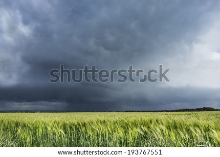 stormy sky over wheat field, nature landscape