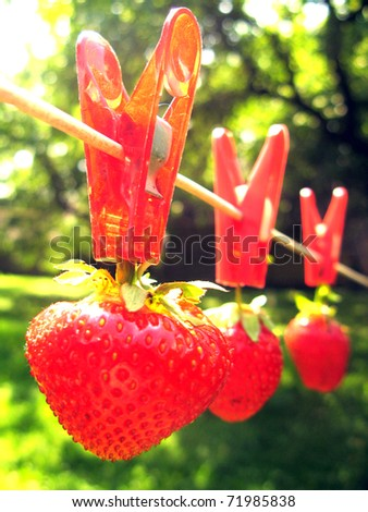 Straberry production - stock photo