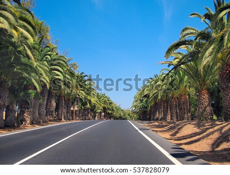 Straight asphalt road through of the palm trees alley rows on the sides. Against of deep blue sky background. Fuerteventura, Canary Islands, Spain