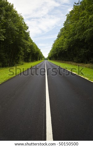 Straight black roadway trough a thick forest - stock photo