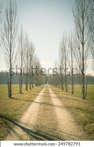 Straight dirt road with row of trees on both side passing through fields and woods. Cross processed with filtered retro look. Filtered retro look, decontrasted and toned image. - stock photo