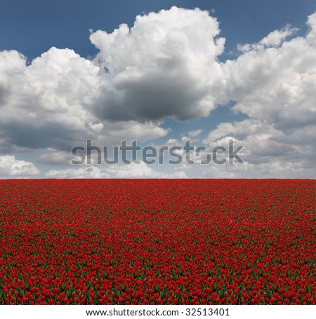 Straight field of red tulips under blue cloudy sky - stock photo