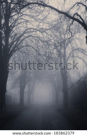 Straight foggy passage surrounded by dark trees in late autumn - stock photo