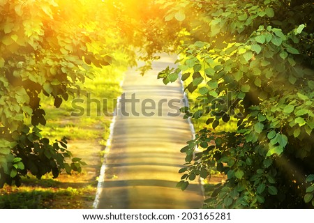 straight road in a park surrounded by branches and leaves of trees. summer park background - stock photo