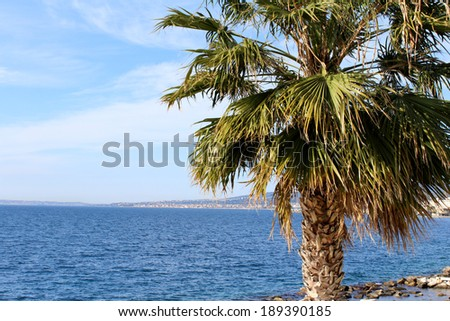 Strait of Messina and Palm