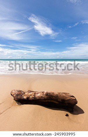 Stranded wood logs at the beach - stock photo