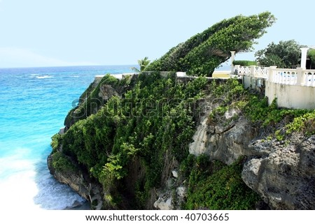 strange bended tree on a cliff onCrane beach, Barbados - stock photo