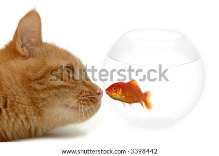 Strange friends or naive goldfish? - stock photo