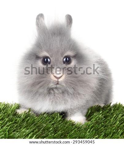 Strange looking rabbit bunny - stock photo