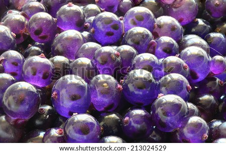 Strange purple berries.  - stock photo