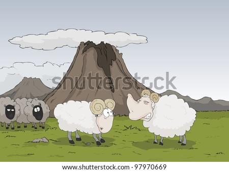 Strange sheep on a mountain side - stock photo