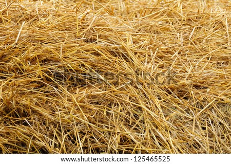 Straw as Background - stock photo