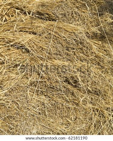 Straw background. - stock photo