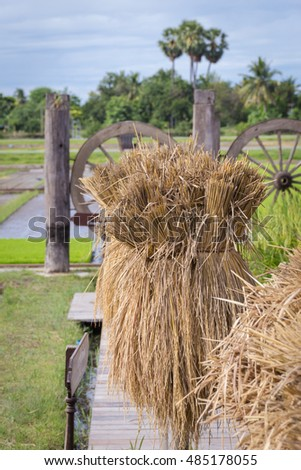 straw bales after harvest in Thailand countryside.