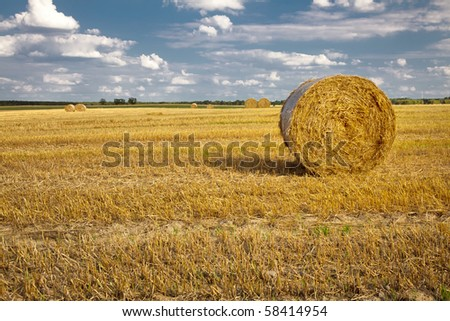 Straw bales at the field