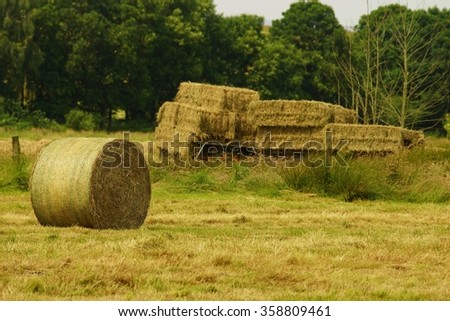 Straw bales in a meadow - stock photo