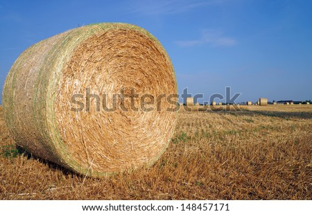 straw bales on a field / agriculture - stock photo
