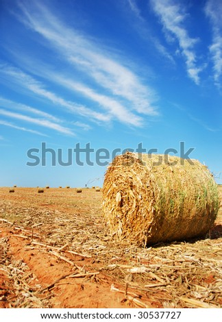 Straw bales on a harvested field