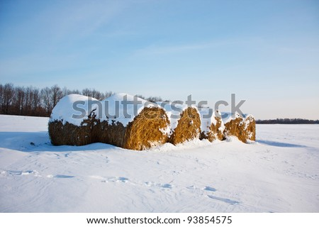 Straw bales on farmland in winter with blue sky - stock photo