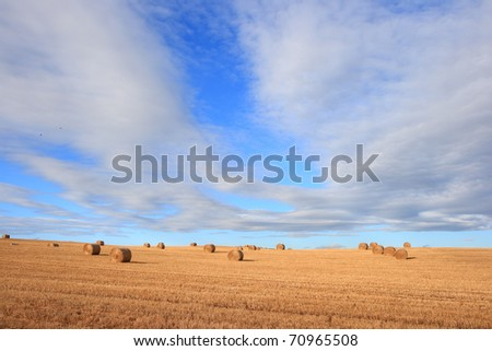 Straw bales on farmland on sunny day (wide angle perspective)