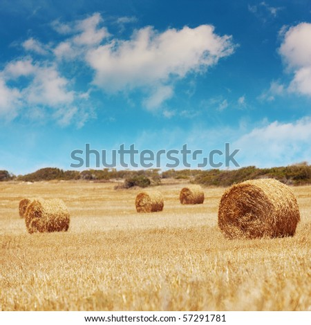 Straw bales on farmland with blue sky. Rural landscape