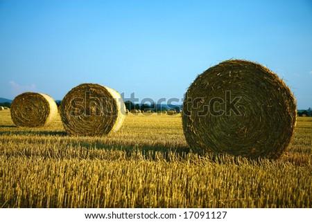 straw bales on the farm field - stock photo