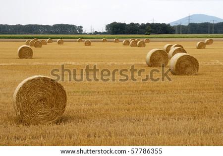 Straw ball on field - stock photo