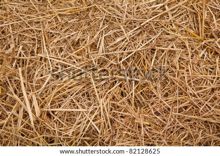 straw from rice background - stock photo
