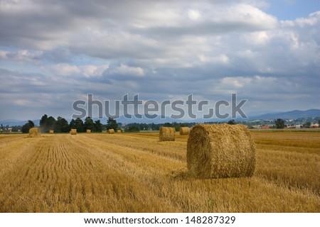straw rolls on field  - stock photo