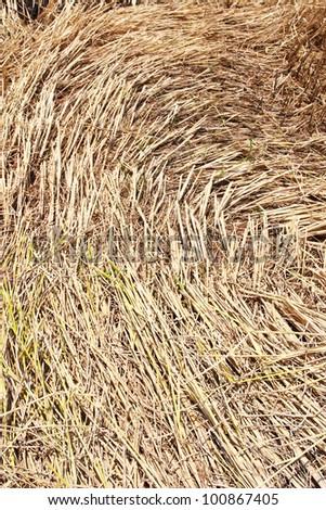 Straw texture background, closeup - stock photo