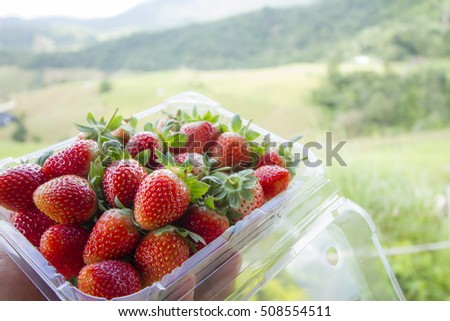 Strawberries fresh from the farm
