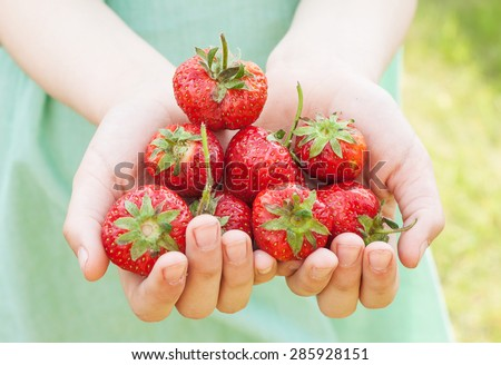 Strawberries in child's hands - close up. Spring - fresh harvest from the garden. - stock photo