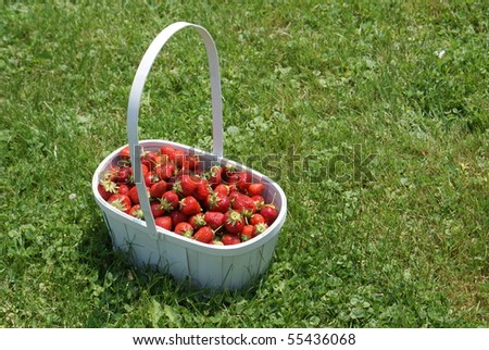 strawberries in white basket on grass