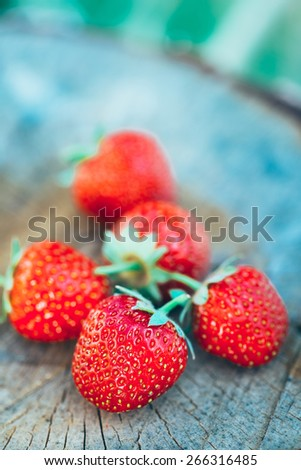 Strawberries. Organic Berries Closeup. Juicy Fresh Ripe Red Strawberries On An Old Birch Stump. Toned Image - stock photo
