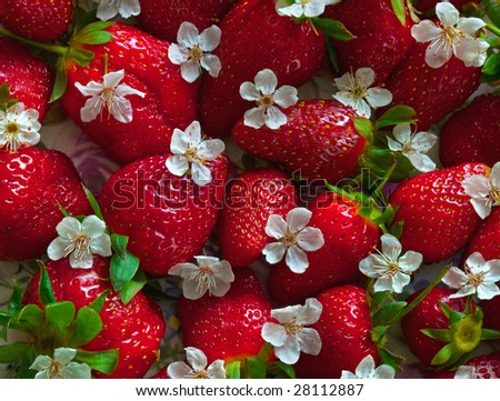 Strawberries with cherry flowers - stock photo