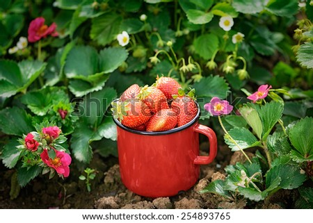 strawberry bowl - stock photo