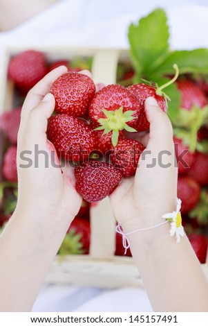 Strawberry - child with picked fresh strawberries in the garden - stock photo