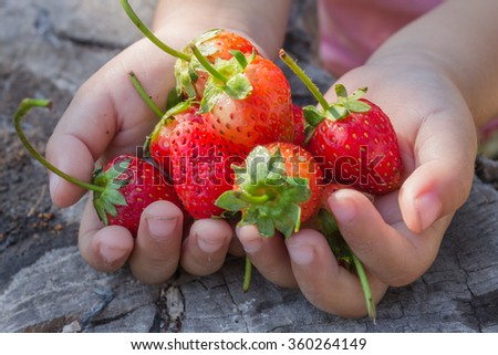 Strawberry in girl hand.