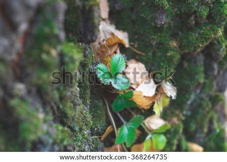 strawberry in the forest - stock photo