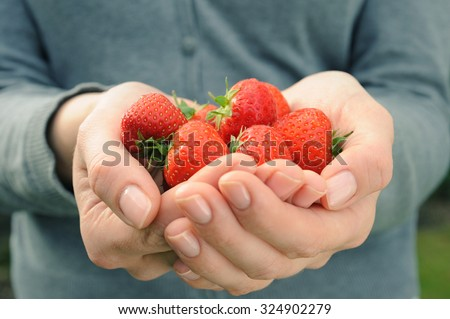 Strawberry in womans palms on grey background
