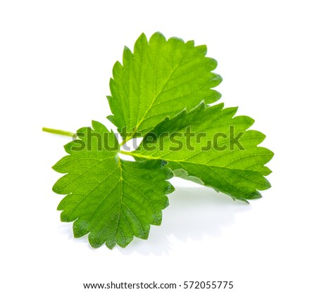 strawberry leaf isolated on white background