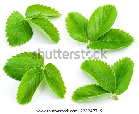 Strawberry leaves isolated on white background - stock photo