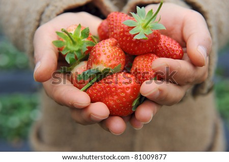 strawberry lie in female hands - stock photo