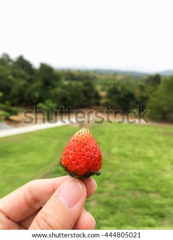 Strawberry on hand with nature - stock photo