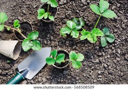 Stock images royalty free images vectors shutterstock for Gardening tools mauritius