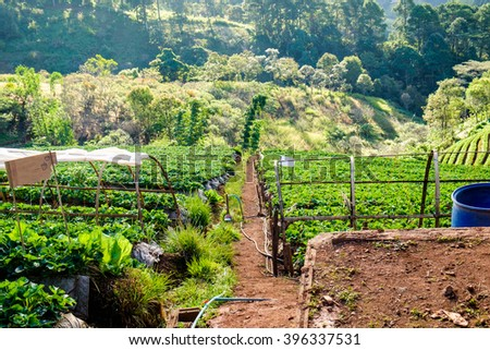 Strawberry platation mountain stairs beautiful landscape