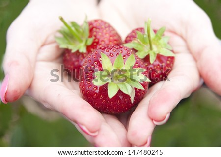 strawberry red field plant green hand - stock photo