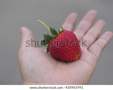 Strawberry red on hand - stock photo