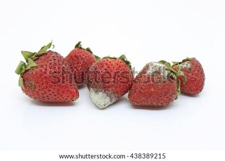 Strawberry's rotten moldy on white background - stock photo