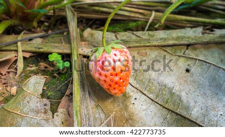 strawberry with dry leaf  - stock photo